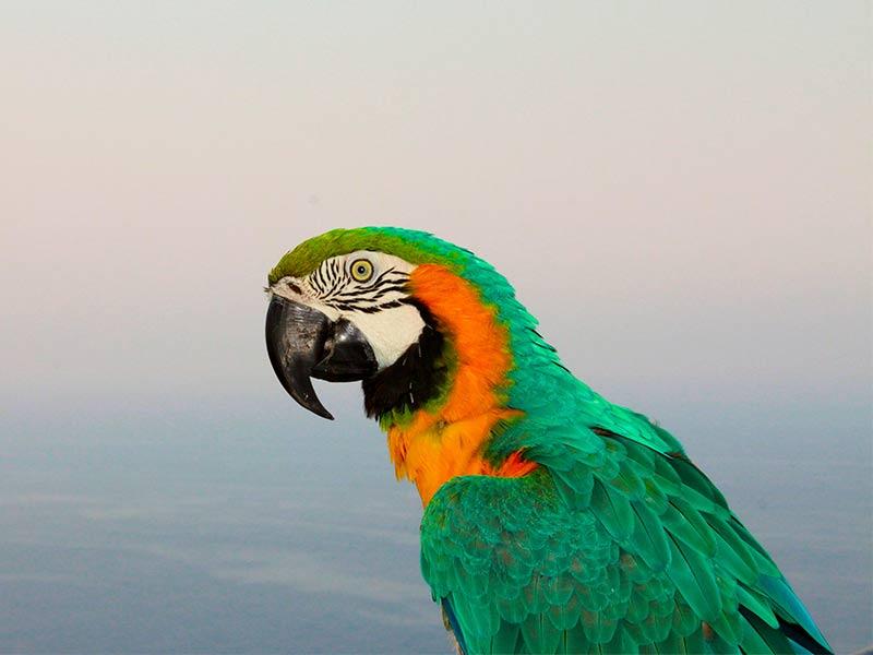 cuidado animales exoticos