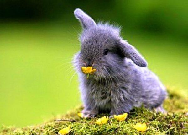 7 cosas por las que tener un conejo