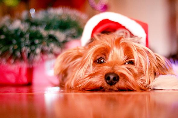 Perro Papa Noel