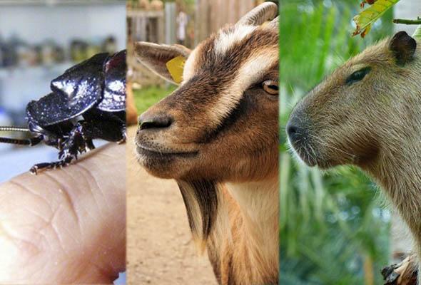 Diez mascotas curiosas