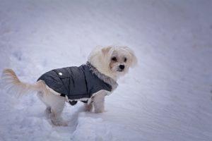 perro invierno