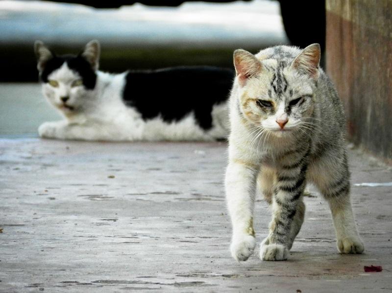 colonia-gatos