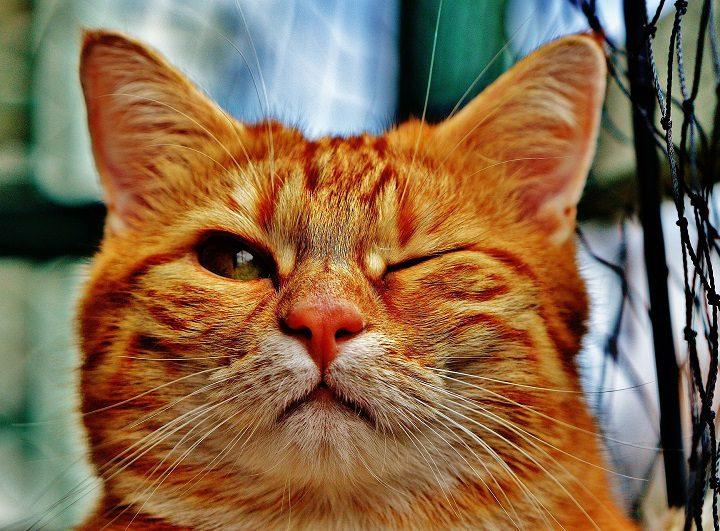 """Madrid crea una red de """"colaboradores"""" de colonias de gatos"""