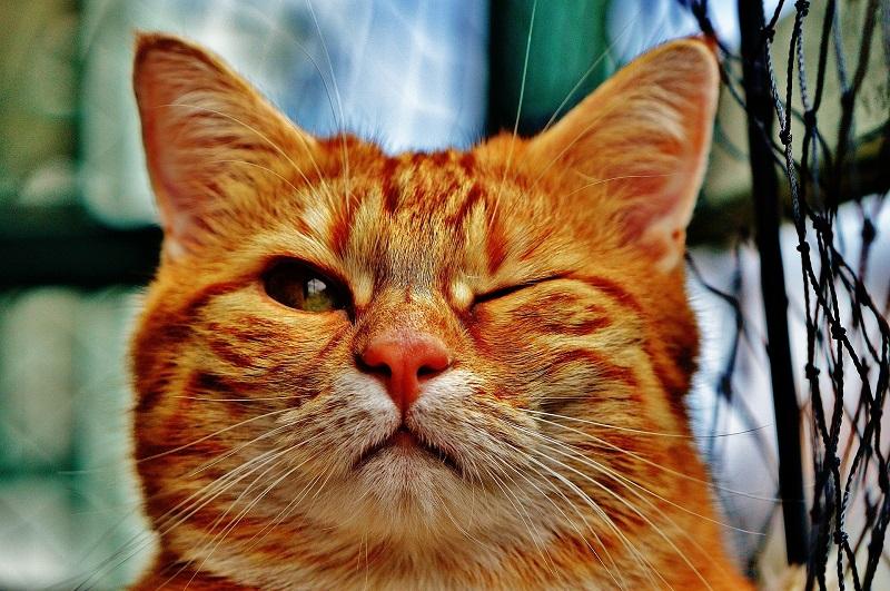 gato-guinando-ojo