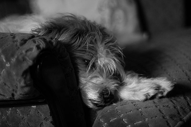 perro-eutanasia-2