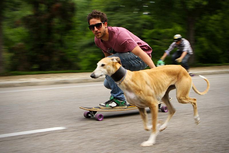 perro-paseo-patin-parque
