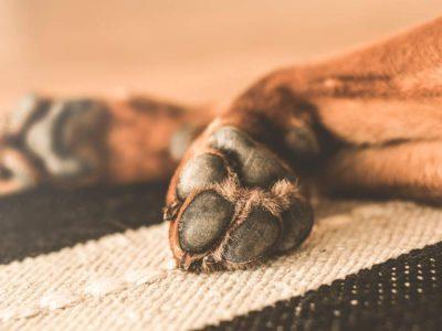 Cinco consejos para cuando muere tu mascota: No te dejes engañar