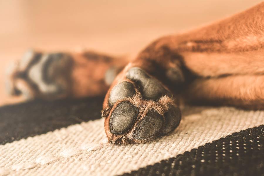 mascota-patas