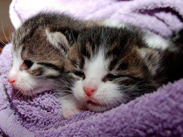 adopcion gatos principal