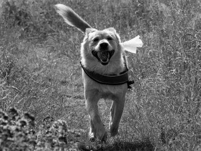 Perros heroicos: 4 ejemplos que demuestran que el perro es el mejor amigo del hombre