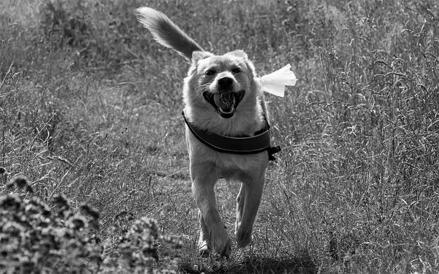 cabecera-perro-heroe