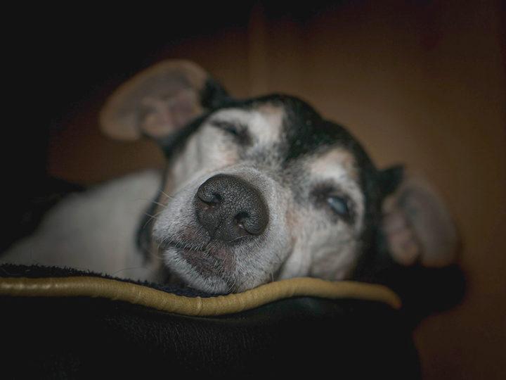 Cinco síntomas de que tu perro puede morir pronto
