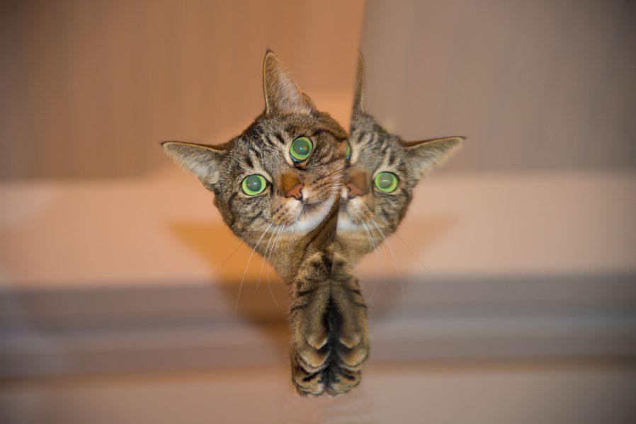 gato escondite