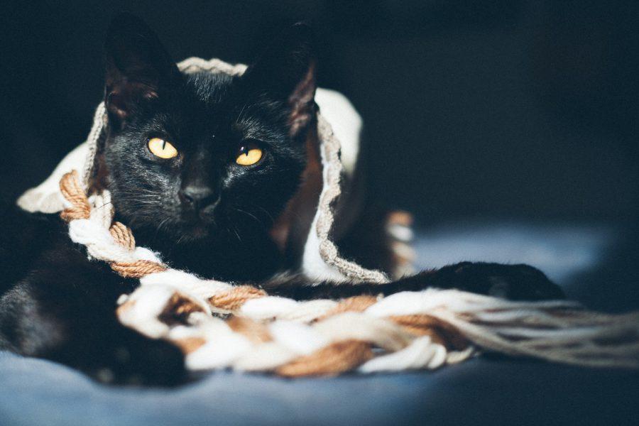 gato juguete lana