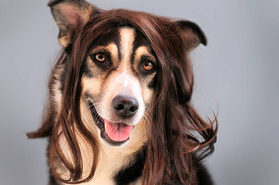 pelo-perro-verano