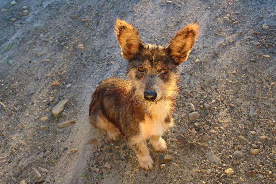 Adoptar perro abandonado