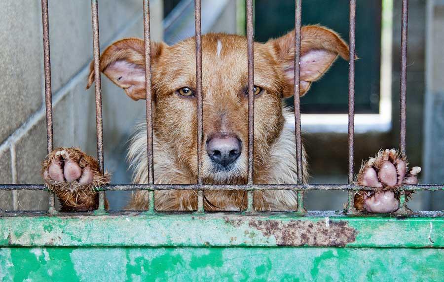 Perro tras jaulas de perrera