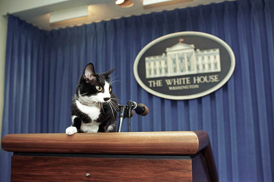 Gato de la Casa Blanca