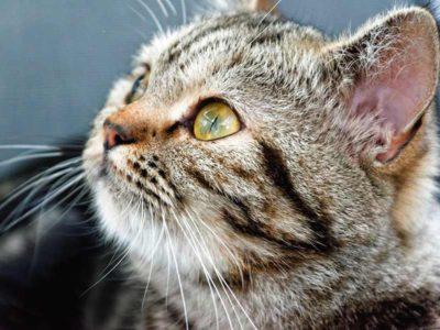¿Cuándo es el Día Internacional del Gato?
