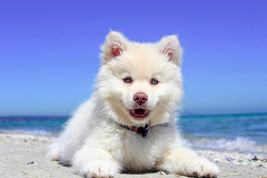 perro playa verano