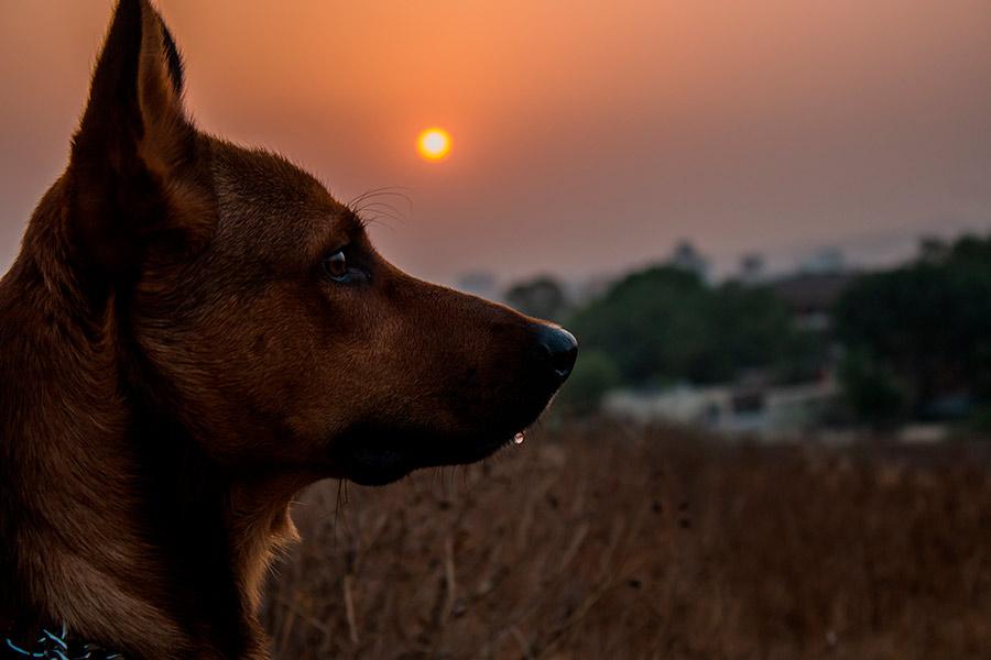 perro crematorio de mascotas
