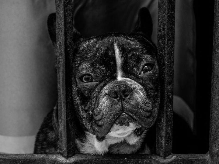 El desastre de los criaderos de animales