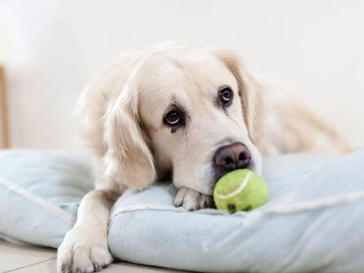 ¿Le afecta a tu mascota la vuelta al cole?