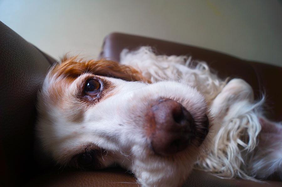 eutanasia-perros-domicilio-2