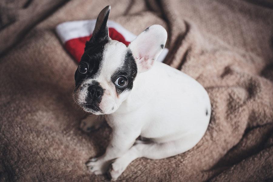 portada-regalos-navidad-perros