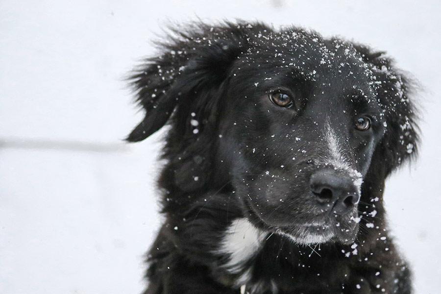 pasear perro frio portada cremascota