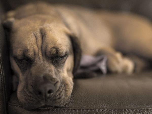 eutanasia-perros-madrid-domicilio