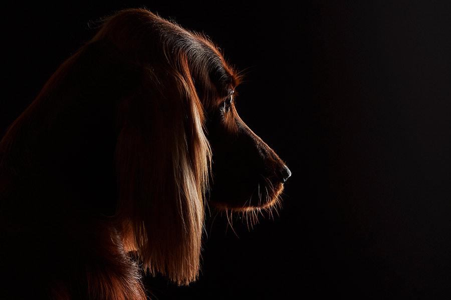precio-icineracion-perro