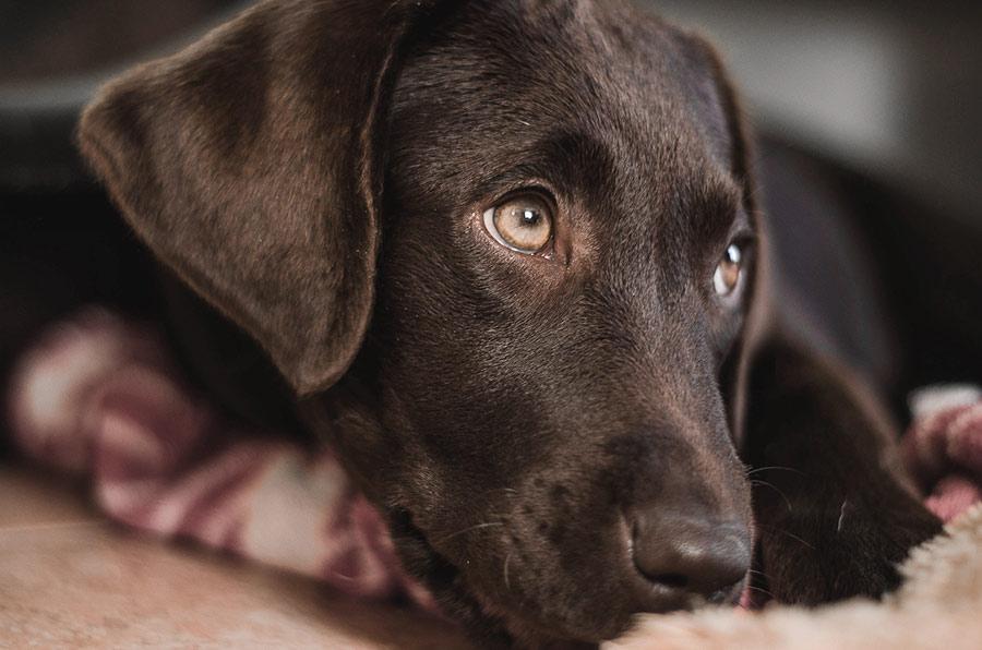 sacrificio-perro (1)