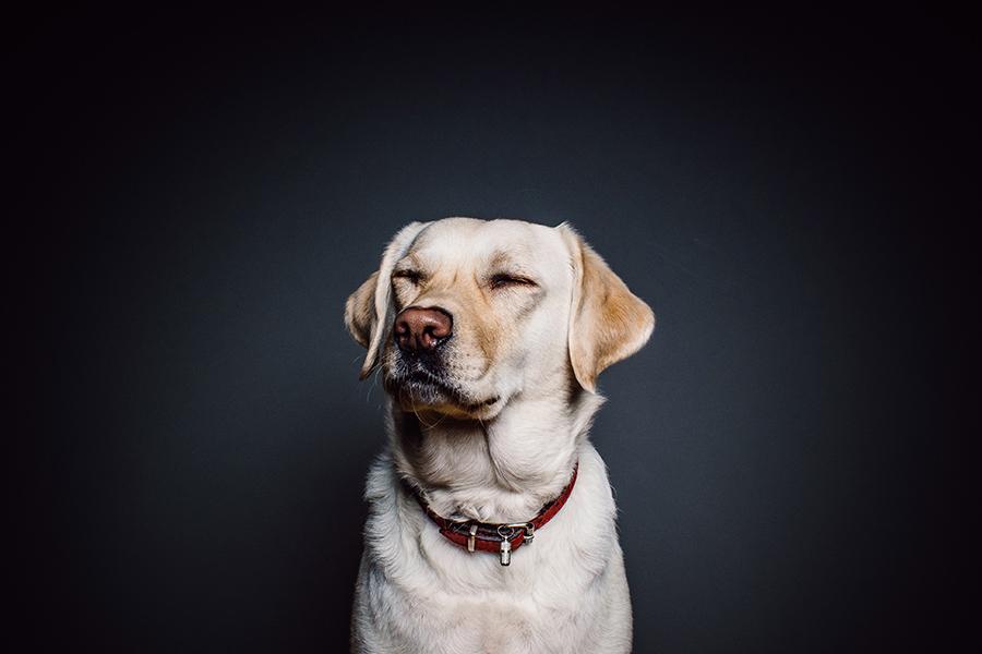 perro alergia portada