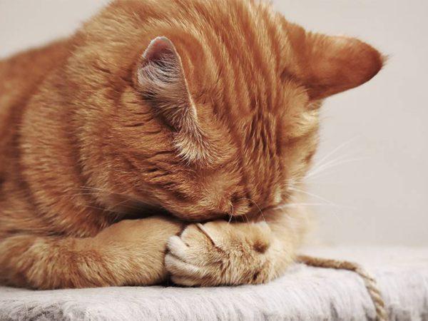 presion contra pared gato perro