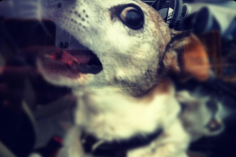 perro-coche-calor (1)