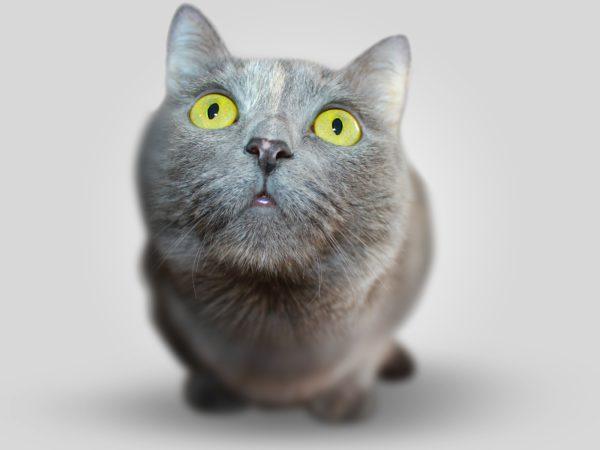 nombres-para-gato (2)