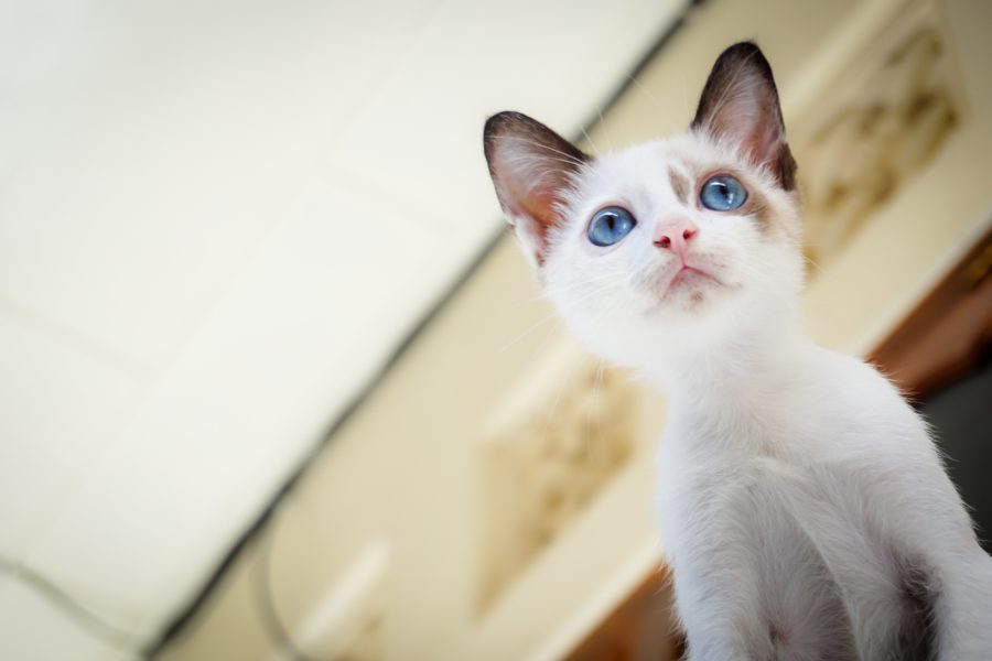nombres-para-gato (4)