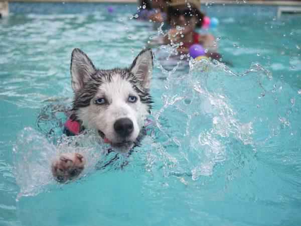 piscina-perro-madrid