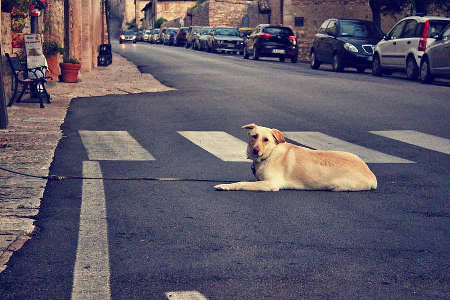 Perro en asfalto