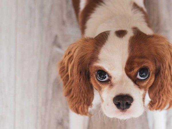 perro-adoptado-adorable