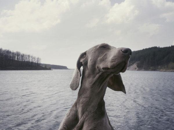 Mi perro ha muerto: ¿Qué es lo que debo hacer?
