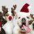Adoptar mascotas en Navidad: Sí o no