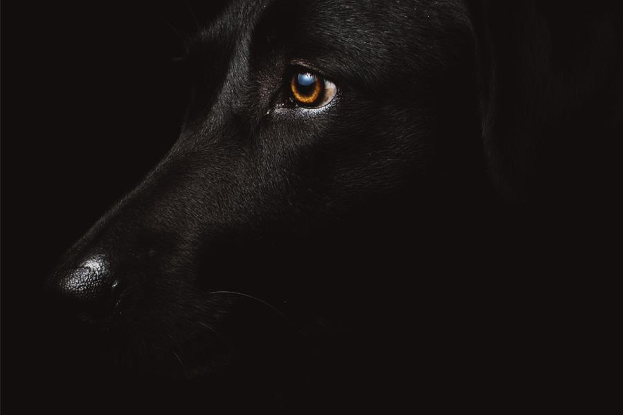 Crematorio de mascotas: Cuánto cuesta incinerar a un perro o un gato