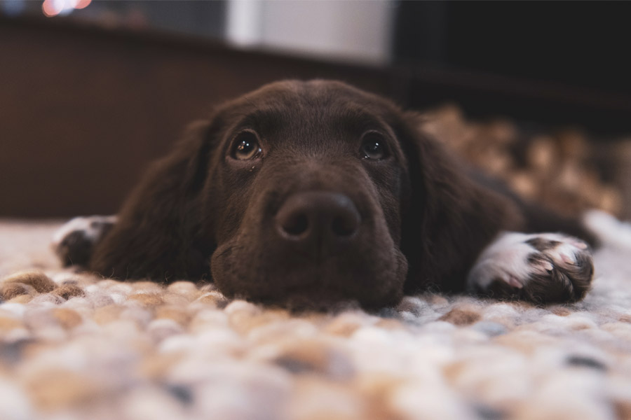 15 propósitos de año nuevo con tu mascota