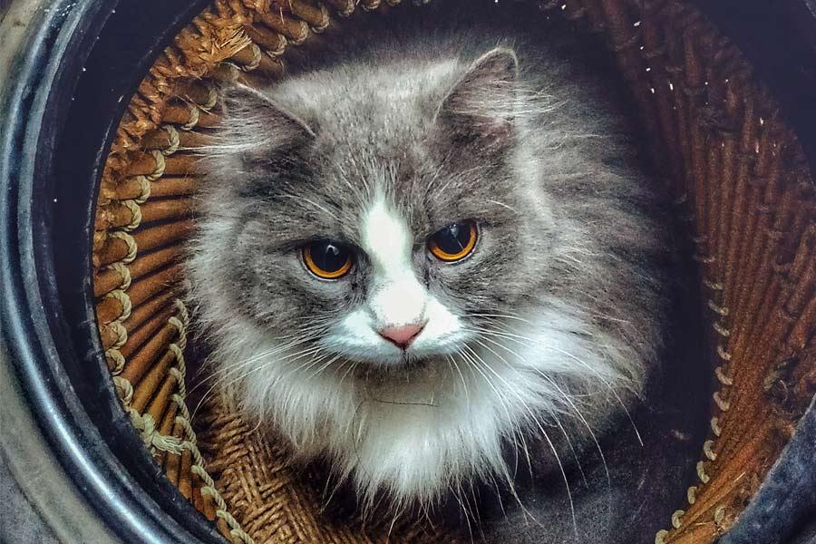 Día Internacional de Gato: 20 curiosidades sobre los gatos que no imaginas