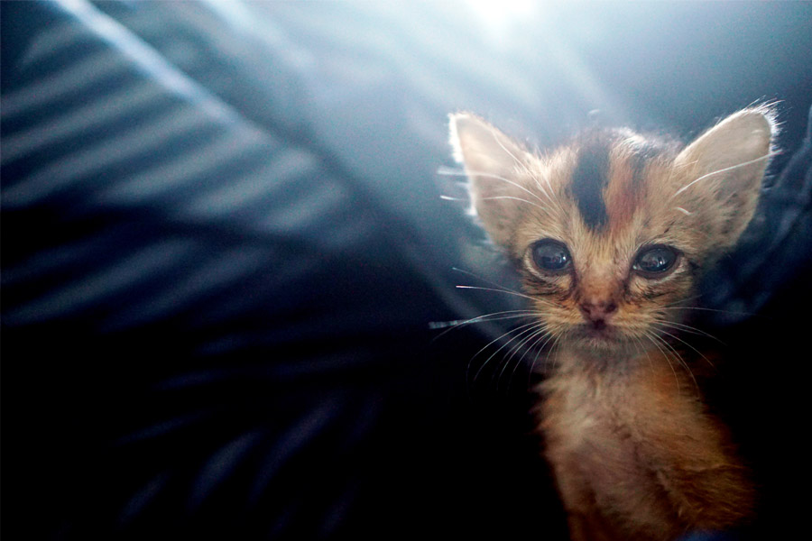 Día Mundial de la Esterilización Animal