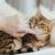 ¿Qué significa el ronroneo de los gatos y por qué lo hacen?
