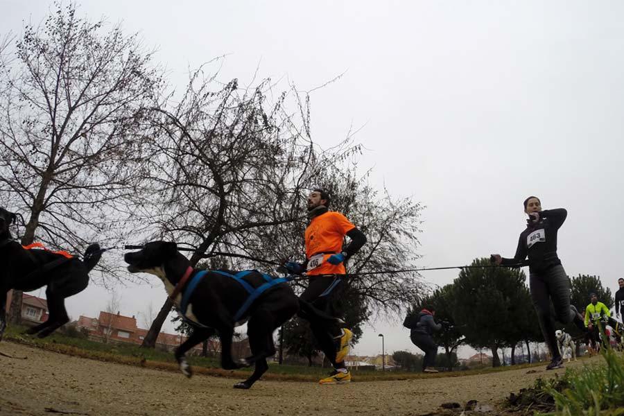 Empieza a correr con tu perro: Practica el canicross