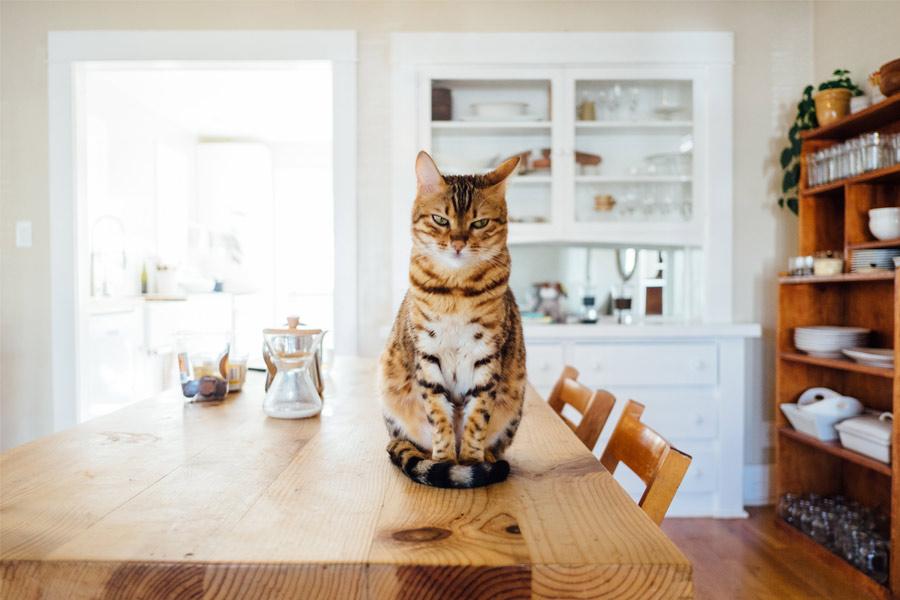 Cuándo llevar a mi gato al veterinario: Consejos para evitar un mal trago
